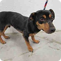 Adopt A Pet :: Blake, Choked Hanging out car - Corona, CA
