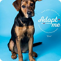 Hound (Unknown Type) Mix Puppy for adoption in New Milford, Connecticut - Zoe