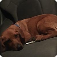 Adopt A Pet :: Miller - Irmo, SC