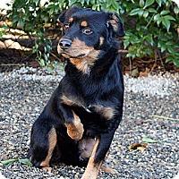 Adopt A Pet :: Cherry - Santa Barbara, CA