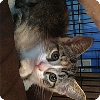 Adopt A Pet :: Shimmer and Shine - Harrison, NY