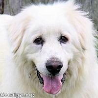 Adopt A Pet :: Fluffy - Beacon, NY