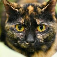 Adopt A Pet :: Cali Lee Rose - Aiken, SC