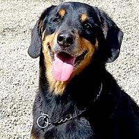 Adopt A Pet :: Cupid - Canterbury, CT