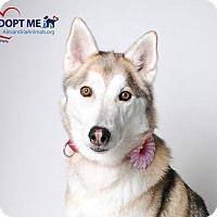 Adopt A Pet :: Yuki - Alexandria, VA
