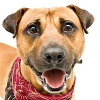 Adopt A Pet :: CHAMP - Orlando, FL