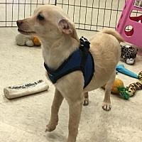 Adopt A Pet :: Hattie - Gilbert, AZ