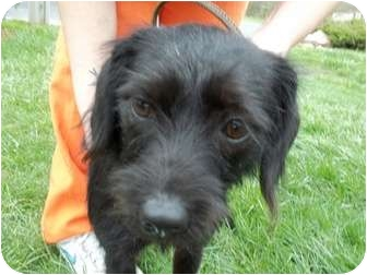 Terrier (Unknown Type, Small) Mix Dog for adoption in Lapeer, Michigan - Opal