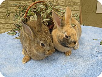 Other/Unknown Mix for adoption in Bonita, California - Grease & Monkey