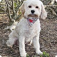 Adopt A Pet :: Mazie - North Palm Beach, FL