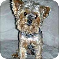 Adopt A Pet :: Woody - Columbus, OH