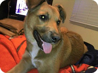 German Shepherd Dog Mix Dog for adoption in San Diego, California - Whisky