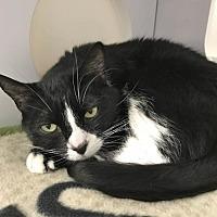 Adopt A Pet :: Julio - Shaftsbury, VT