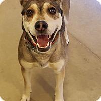 Adopt A Pet :: Princess-Adopted! - Detroit, MI
