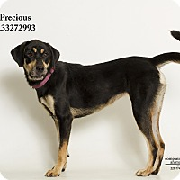 Adopt A Pet :: Precious - Baton Rouge, LA