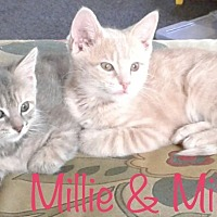 Adopt A Pet :: Milo - Covington, KY