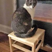 Adopt A Pet :: Callie - Des Moines, IA