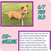 Adopt A Pet :: Brownie/DD - Columbia, TN