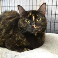 Adopt A Pet :: Wendy - Covington, LA
