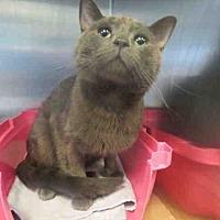 Adopt A Pet :: JONES - Toronto, ON