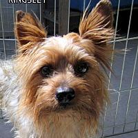 Adopt A Pet :: Kingsley (Ritzy) - Lindsay, CA