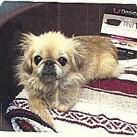 Adopt A Pet :: Ishani - Sacramento, CA