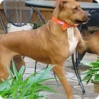 Adopt A Pet :: *Abby - Winder, GA