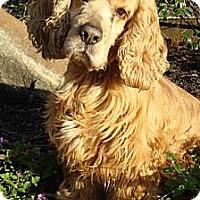 Adopt A Pet :: Sonny - Sugarland, TX