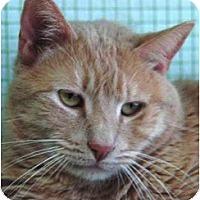 Adopt A Pet :: Simba - El Cajon, CA