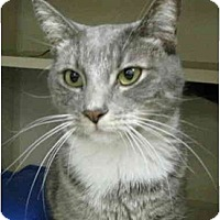 Adopt A Pet :: Biscuit - Mesa, AZ