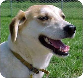 Beagle Mix Dog for adoption in HARRISONVILLE, Missouri - MAGGIE