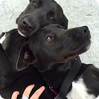 Adopt A Pet :: Mary-Kate & Ashley - Lewisville, IN