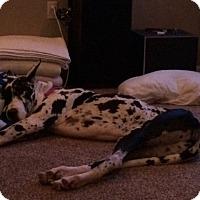 Adopt A Pet :: Apollo - Stevens Point, WI