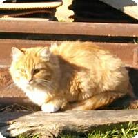 Adopt A Pet :: Morgan - Denton, TX