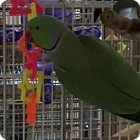 Adopt A Pet :: Squeaky - Punta Gorda, FL