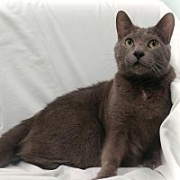 Adopt A Pet :: Garey - Toronto, ON