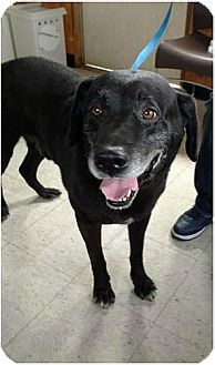 Labrador Retriever Dog for adoption in Annapolis, Maryland - Mar