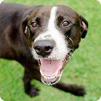 Adopt A Pet :: Todd - Greenwood, SC