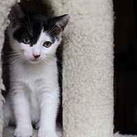 Adopt A Pet :: Nina - Wayne, NJ