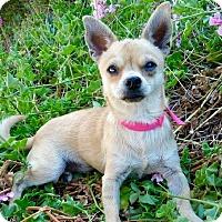 Adopt A Pet :: KIWI - Santa Monica, CA