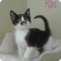 Adopt A Pet :: Kiki - Harrisville, WV