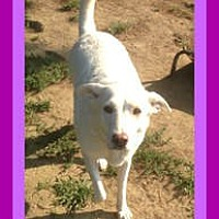 Adopt A Pet :: CABELA - $150 - White River Junction, VT