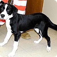 Adopt A Pet :: Zach - Washington Court House, OH