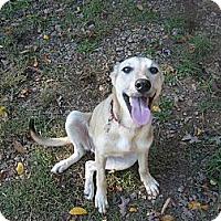 Adopt A Pet :: Crystal - Eden, NC