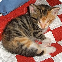Adopt A Pet :: Rosebud - Richmond, VA