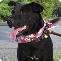 Adopt A Pet :: UPDATE: Gary, therapy dog!!!!! - Baltimore, MD