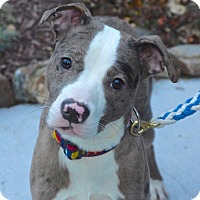 Adopt A Pet :: Alex - Reisterstown, MD