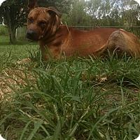Adopt A Pet :: Arthur - Orlando, FL
