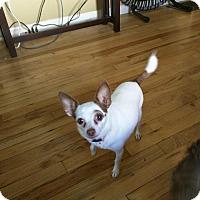 Adopt A Pet :: Chloe - Delaware, OH