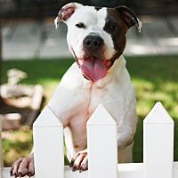 Adopt A Pet :: Melody - Stockton, CA